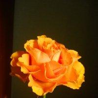 Рыжая роза :: Галина