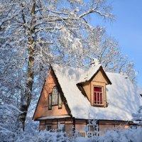 Морозное утро :: Николай Танаев