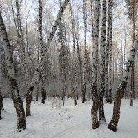 Лыжня в зимнем парке :: Татьяна Котельникова