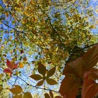 В осеннем лесу... :: Наталья Соколова