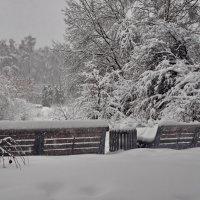 С утра такая кутерьма вокруг — снежинками заполнено пространство :: Марина Волкова