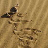 карликовая африканская гадюка :: Георгий А