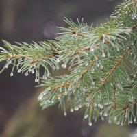 Тёплая дождливая Зима :: Игорь Касьяненко