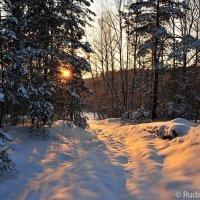 Вечер в зимнем лесу :: Сергей