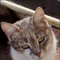 Кошечка красавица :: Нина Корешкова