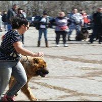 ВЫСТАВКА  НАДЁЖНЫХ  ДРУЗЕЙ. (Большие собаки) :: Юрий ГУКОВЪ