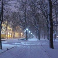 раннее зимнее утро :: Елена