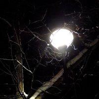 Ночь, улица, фонарь ... :: Андрей Лукьянов