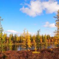 На озере :: ГАЛИНА Баранова
