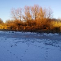 Зимний пейзаж :: Татьяна Королёва