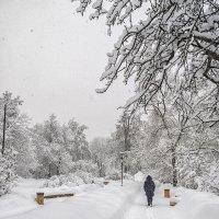 Зима в аллеях Ботанического сада :: Александр Лебедевъ