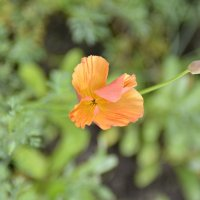 Цветок3 :: Александр Шарапов