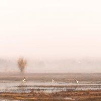 Первые птицы. :: Олег Сахнов