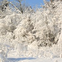 Зимняя красота :: ninell nikitina