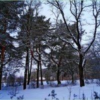 Лесные прогулки :: Vladimir Semenchukov