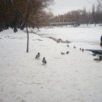 Зимовка... :: Serg