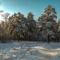 Зимний день. :: Rafael
