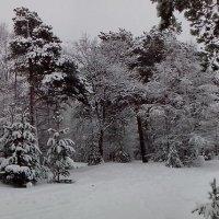 Заколдован невидимкой дремлет лес... :: Ирина Л