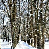 Аллея парка. :: Михаил Столяров