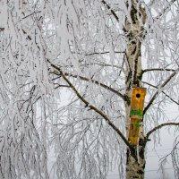 Летние краски зимой :: Александр Лобанов