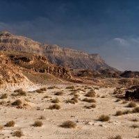 Зимнее утро пустыни :: Alex Mimo