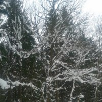 Зима в Баболовском парке :: Сапсан