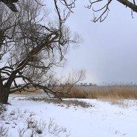 Февральский пейзаж :: Маргарита Батырева