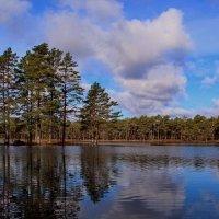 Пейзаж весеннего леса :: Татьянка *