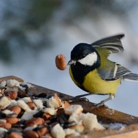 поиграем?) :: linnud
