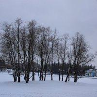 Волшебные зимние сны.... :: Tatiana Markova