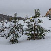 Зима в деревне :: Виктор
