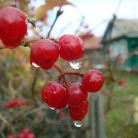 Дождь в деревне... :: Елизавета Успенская