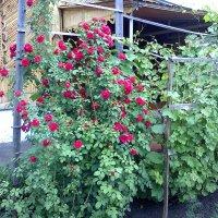 Во дворе. :: венера чуйкова