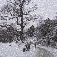 Встретимся в любую погоду :: liudmila drake