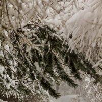 В зимнем лесу :: Александр