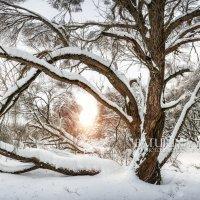Раскидистое дерево :: Юлия Батурина