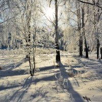 Зима... Морозно... :: Геннадий Ячменев