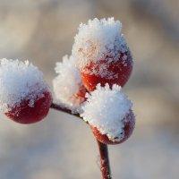 Снежные шапочки :: Swetlana V