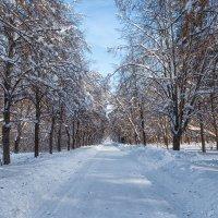 Прогулка в Кусково :: Юрий Захаров