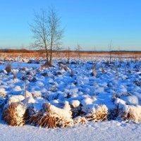Морозный денек :: Николай Танаев