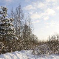 Лыжная прогулка :: Татьяна Петранова