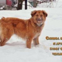 Пусть год Жёлтой собаки принесёт всем мир! :: Татьяна Помогалова