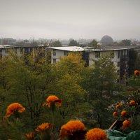 прощание с осенью :: kuta75 оля оля