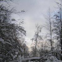 Измайловский парк, февраль :: Анна Воробьева