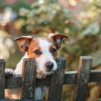 Сосед по даче, мой лучший друг! :: Натали Пам