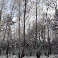 ... сам мороз наряд соткал, лес украсил жемчугами, бросил снега облака ... :: Татьяна Котельникова
