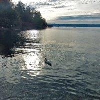 Вечер на  озере. :: Наталья