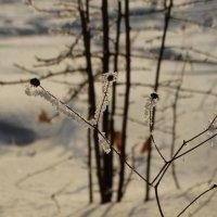 зима .. :: Alla Swan