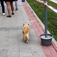 Прогулка в парке. :: венера чуйкова