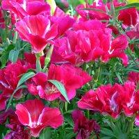 Яркие краски лета! :: Вера Щукина